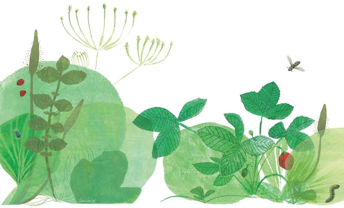 image-jardin